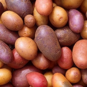 Post image for Growing Early Potatoes